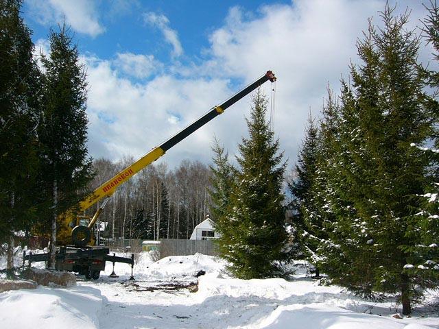 Зимой пересаживают даже вот такие большие деревья.